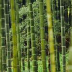 rain forest health
